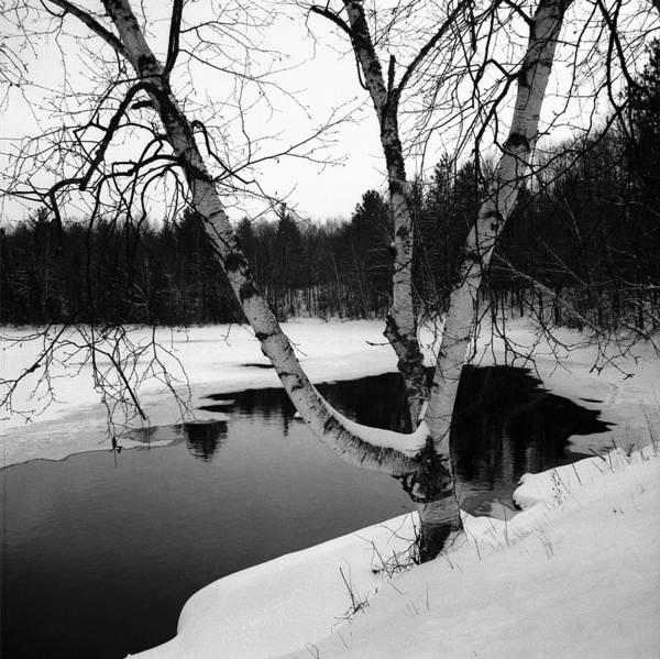 Wall Art - Photograph - Birch In Snow by Robert Natkin