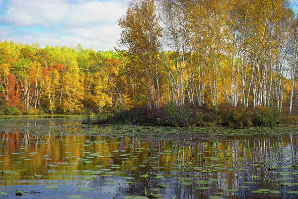 Photograph - Birch Island by Bruce Thompson