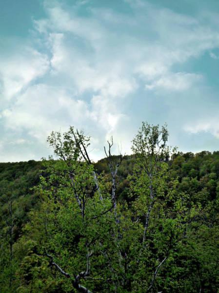 Photograph - Birch To The Sky by Cyryn Fyrcyd