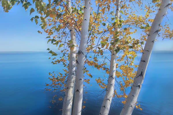 Photograph - Birch Trees On The Lake Dreamscape by Debra and Dave Vanderlaan