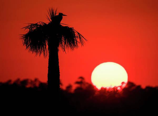 Photograph - Bird And Sunset by Jeffrey Klug