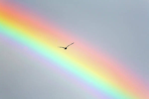 In Flight Photograph - Bird Bow by Sean Davey