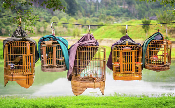 Photograph - Bird Cages Bac Ha Vietnam by Gary Gillette