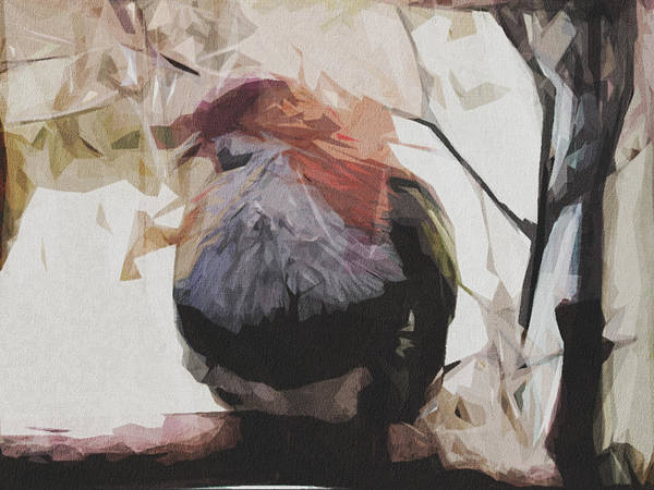 Wall Art - Digital Art - Bird Colorful Zoo Feathers by Draw Sly