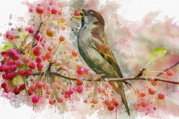 Painting - Bird Eating Cherries From A Tree Watercolor by Art Shack