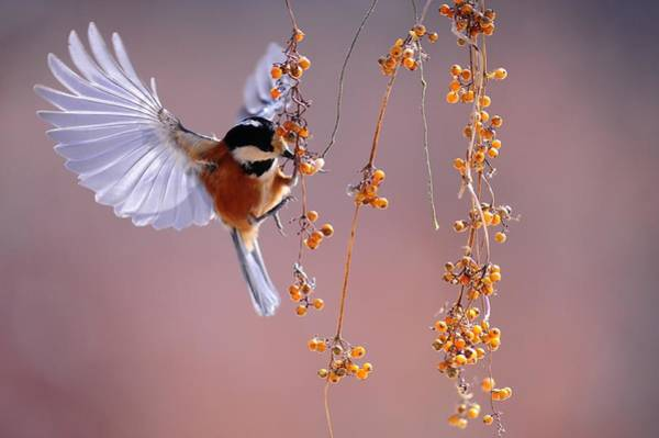 Photograph - Bird Eating On The Fly by Top Wallpapers