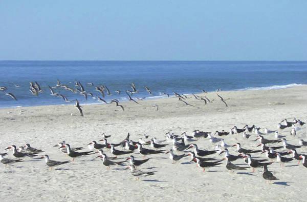 Photograph - Bird Herd by JAMART Photography