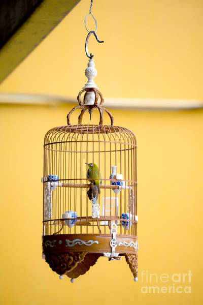 Wall Art - Photograph - Bird In An Ornate Cage, Singapore by Chris Howey