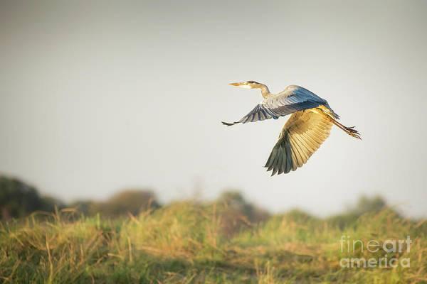 Wall Art - Photograph - Bird In Flight by Timothy Hacker