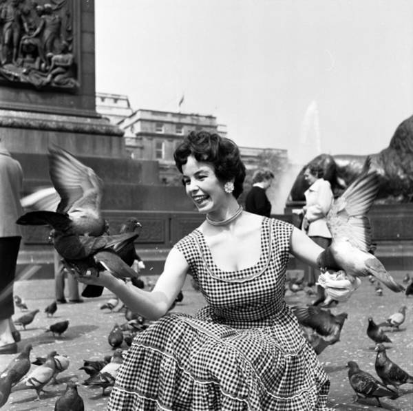 Photograph - Bird In The Hand by Bert Hardy