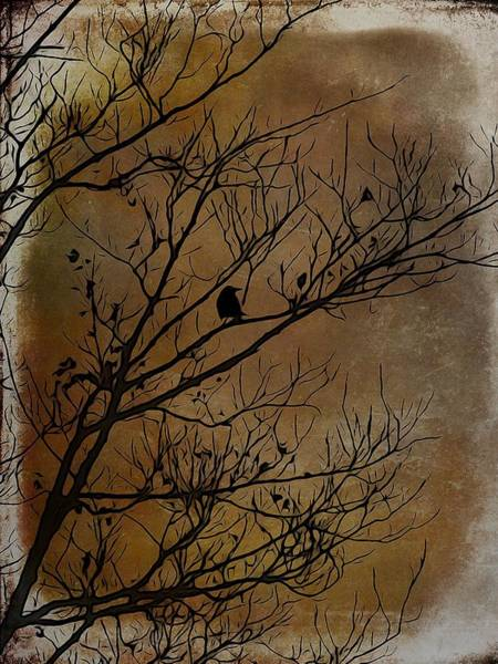 Wall Art - Photograph - Bird In Tree by Gothicrow Images