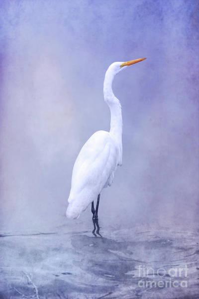 Wall Art - Digital Art - Bird In Water On Blue by Randy Steele