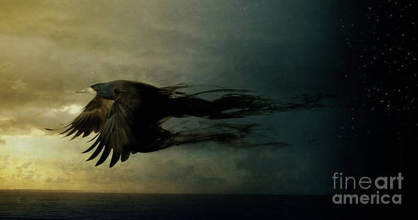 Bird In Flight Digital Art - Bird Kingdom 2 by Johan Lilja