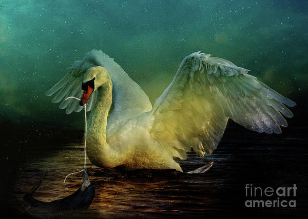 Wall Art - Digital Art - Bird Kingdom 6 by Johan Lilja