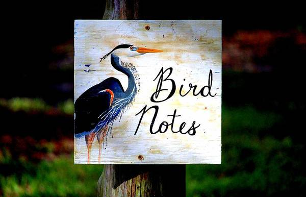Photograph - Bird Notes Sign by Cynthia Guinn