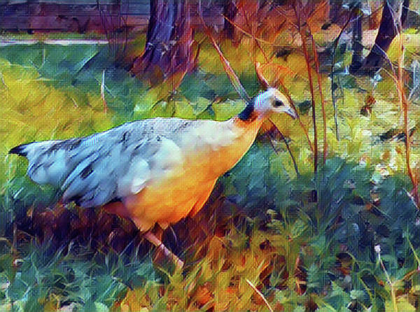 Digital Art - Bird Of A Different Color by Perry Correll