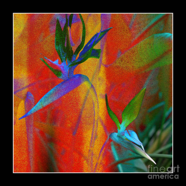 Photograph - Bird Of Paradise Creative With Border by Carol Groenen