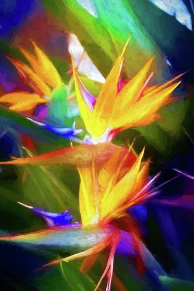 Photograph - Bird Of Paradise Hues by Alice Gipson