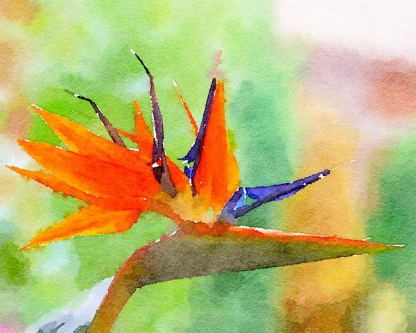 Mixed Media - Bird Of Paradise by Susan Rydberg