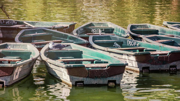 Photograph - Bird On A Boat Barcelona Spain by Joan Carroll