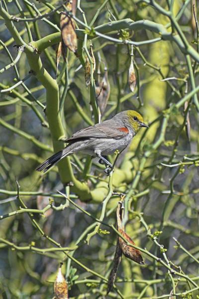 Photograph - Bird On A Branch by Chance Kafka