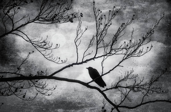 Wall Art - Photograph - Bird On Autumn Branches Black And White by Garry Gay