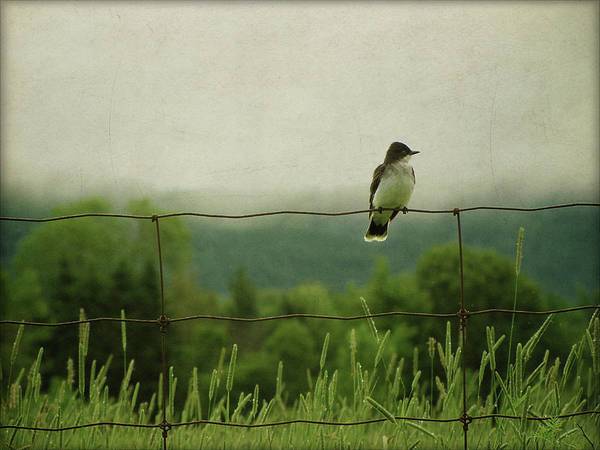 Fence Photograph - Bird On Fence by Francois Dion