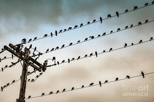 Wall Art - Photograph - Bird Perching On Power Cables, Ocho by G10 Photography