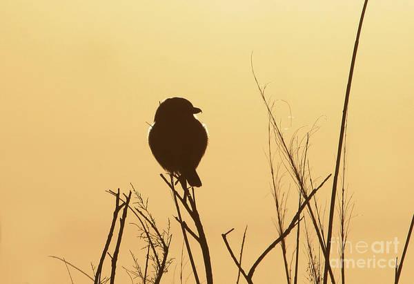 Wall Art - Photograph - Bird Silhouette by Michael Vance Pemberton