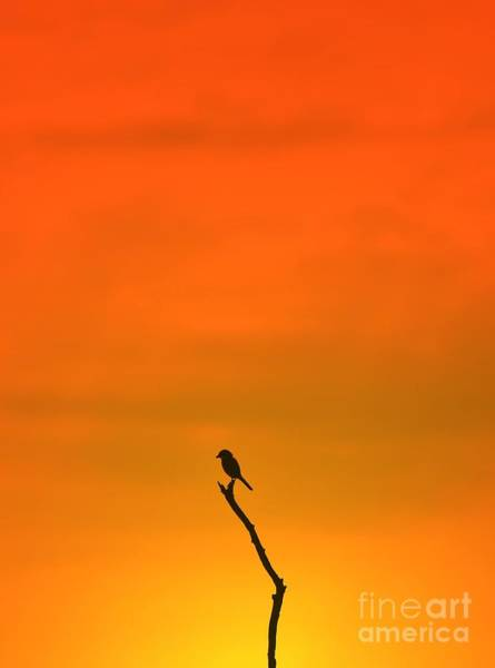 Wall Art - Photograph - Bird Silhouette - Wildlife Background - by Stacey Ann Alberts