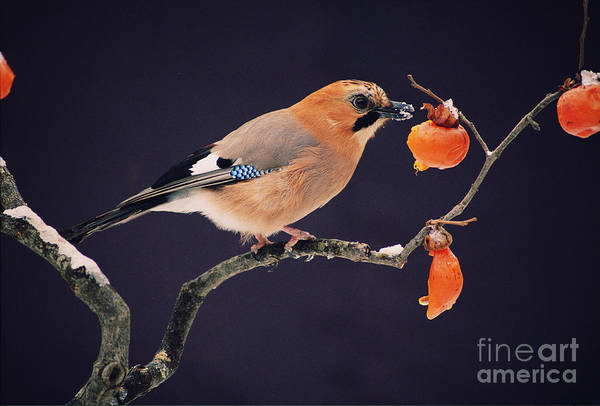 Wall Art - Photograph - Bird by Wizdata