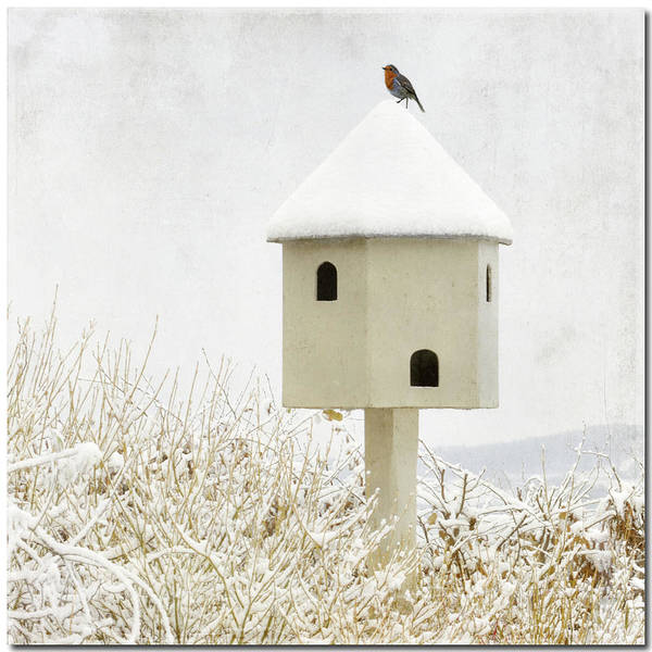 Photograph - Birdhouse by Anne Hawken
