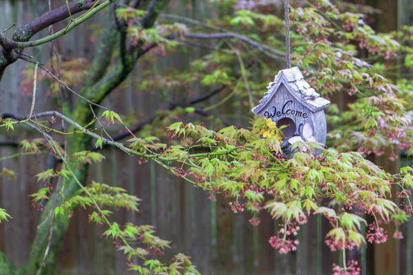 Photograph - Birdhouse In Blooming Japanese Maple by Jason Fink
