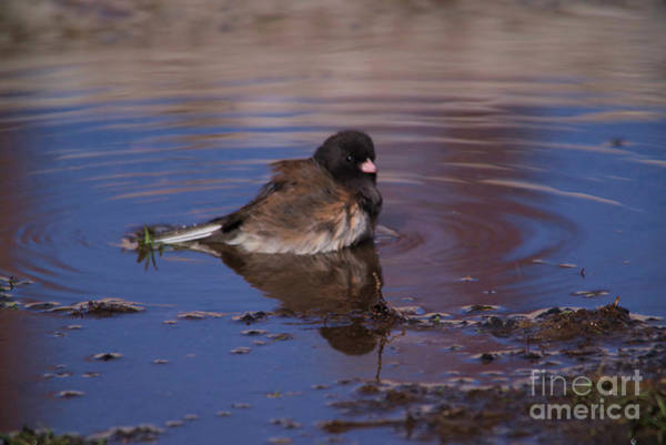 Wall Art - Photograph - Birdie Bath by Jeff Swan