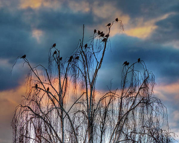 Photograph - Birds At Sunset by John Rodrigues