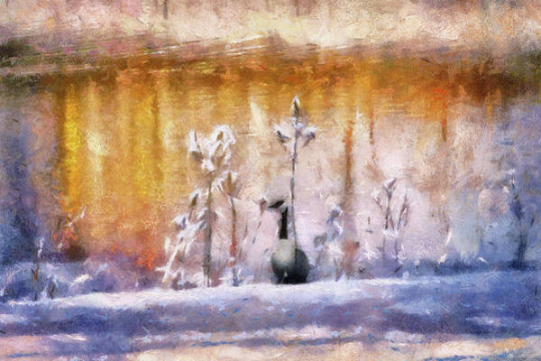 Wall Art - Photograph - Birds Canada Goose By The Winter Sunset Pond Pa by Thomas Woolworth