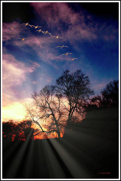 Photograph - Birds In Flight And Tree Silhouettes At Dusk by A Gurmankin