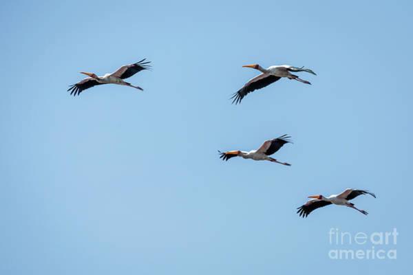 Wall Art - Photograph - Birds In Flight by Timothy Hacker