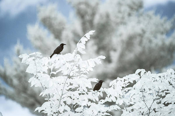 Photograph - Birds In Infrared by Brian Hale
