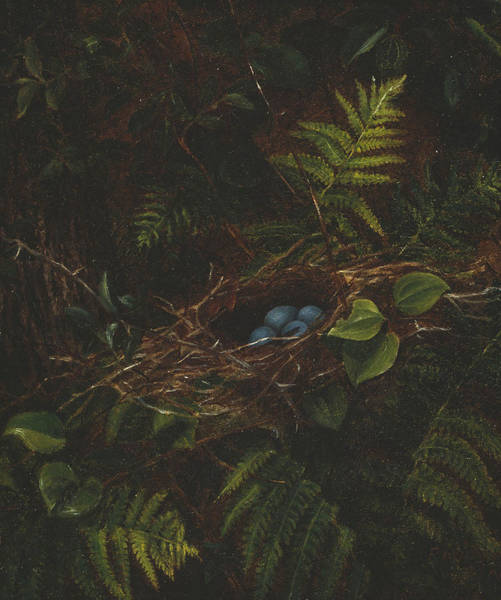 Wall Art - Painting - Bird's Nest And Ferns by Fidelia Bridges