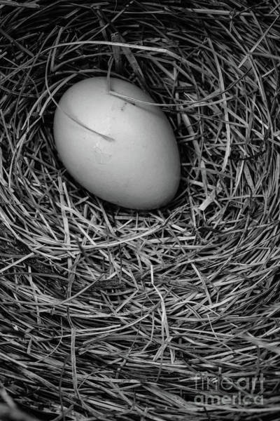 Wall Art - Photograph - Birds Nest Black And White by Edward Fielding