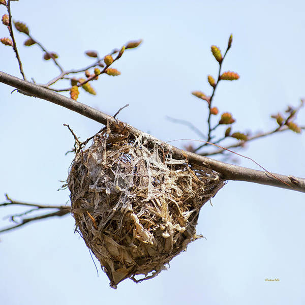Wall Art - Photograph - Birds Nest by Christina Rollo