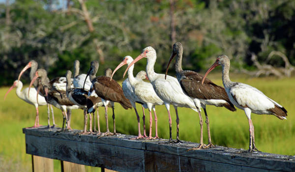 Photograph - Birds Of A Different Feather by Bruce Gourley