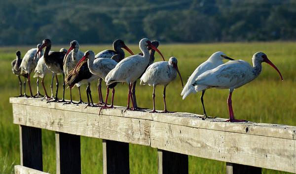 Birds Of A Feather On Jekyll Island Art Print