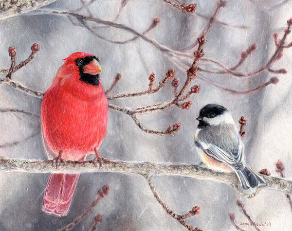 Red Cardinal Drawing - Birds Of A Feather by Shana Rowe Jackson