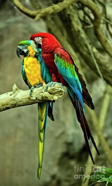 Photograph - Birds Of Color by Jon Burch Photography