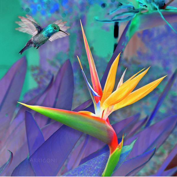 Painting - Birds Of Paradise, Blue by David Arrigoni