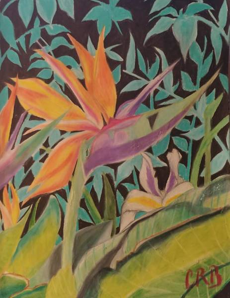 Wall Art - Drawing - Birds Of Paradise by Cheyenne Barnett