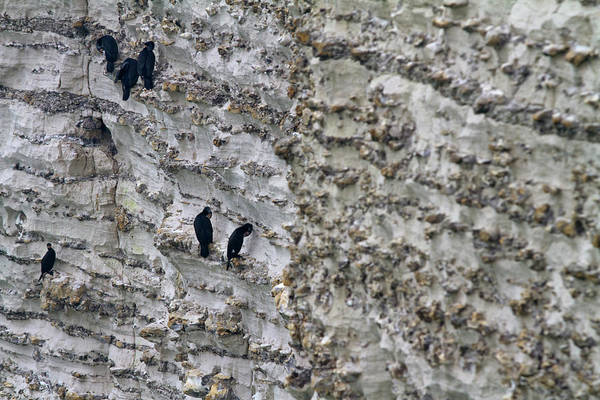 Cormorant Wall Art - Photograph - Birds On A Cliff by Fabrizio Cacciatore