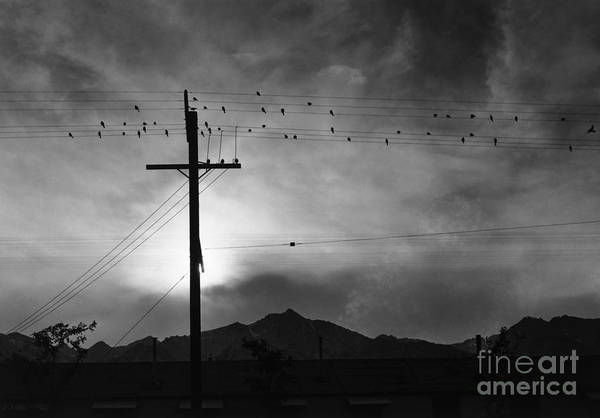 Photograph - Birds On Wire, Evening by Ansel Adams